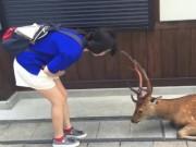 Phi thường - kỳ quặc - Video: Hươu Nhật cúi đầu cảm ơn như người khi được cho ăn
