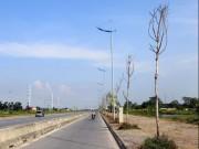 Tin tức trong ngày - Hà Nội: Cây xanh trên đường nghìn tỷ hoá củi khô