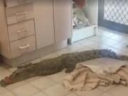 Thế giới - Úc: Tỉnh dậy thấy cá sấu chờ sẵn trong toilet