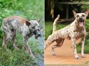 Bạn trẻ - Cuộc sống - Chú chó Bến Tre bị hoại tử mõm giờ ra sao?