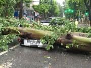 Tin tức Việt Nam - HN: Gió giật cực mạnh, cây đổ ngổn ngang do bão số 1