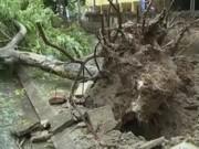 Video An ninh - Bão số 1 giật đổ cây xanh, đè nát nhiều ô tô ở HN