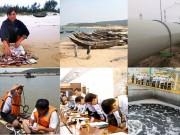 Tin tức trong ngày - Chính phủ báo cáo QH vụ cá chết bất thường hàng loạt