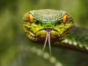 Thế giới - Làm sao để sống sót nếu bị rắn, sư tử, cá sấu tấn công?
