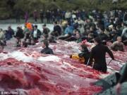 Thế giới - Thảm sát 120 cá voi ở Đan Mạch, cả vùng biển đỏ máu