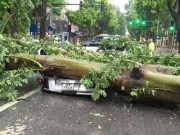 Tin tức trong ngày - Bão số 1 làm chết 2 người, quật đổ gần 40.000 cây xanh