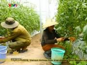 Du lịch - Những cây rau hạnh phúc ở Đà Lạt