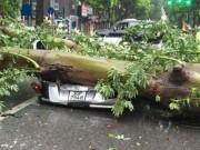 Cây xanh đè bẹp ô tô: Chủ xe có được bồi thường?
