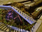 """Tin tức trong ngày - Gốc cây nguyên bọc nilon: """"Chúng tôi không trồng như thế"""""""