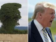 Phi thường - kỳ quặc - Cây lạ có hình dạng giống hệt tỷ phú Trump đang gào hét