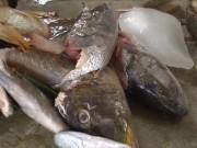 Sức khỏe đời sống - 28 người nhập viện nghi do ngộ độc cá hồng