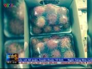 Thị trường - Tiêu dùng - Nguy cơ mất trắng khi xuất khẩu trái cây sang UAE