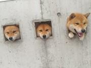 """Sự thật đáng yêu đằng sau 3 chú chó bị """"giam cầm"""""""