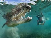 Phi thường - kỳ quặc - Ảnh: Cô gái xinh đẹp mạo hiểm lặn cùng cá sấu khổng lồ