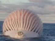 Phi thường - kỳ quặc - Vật thể lạ khổng lồ hình cầu nổi trên biển Australia