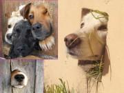 Tranh vui - Cuộc đời không có lỗ thì chó sẽ bớt khổ!