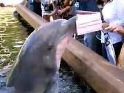 Du lịch - Video: Sững người vì bị cá heo cướp máy tính bảng