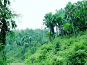 Du lịch - Chu du miền đất cọ Cẩm Khê, Phú Thọ