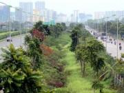 Tin tức trong ngày - Chi 53 tỷ cắt cỏ tỉa cây, đại lộ Thăng Long vẫn như rừng