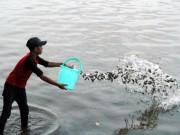 Tin tức trong ngày - Cá vừa được phóng sinh xuống sông Sài Gòn đã bị tóm