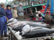 Thị trường - Tiêu dùng - Vượt Thái Lan, cá ngừ Việt Nam hút hàng tại Ý