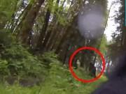 Phi thường - kỳ quặc - Chó đối mặt quái vật bí ẩn trong rừng ở Mỹ