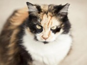 Phi thường - kỳ quặc - Mèo tấn công chủ và đàn chó pitbull 7 con nhập viện