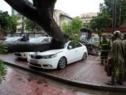 Tin tức trong ngày - Hà Nội: Bão chưa về, cây xanh đã bật gốc đè nát ô tô