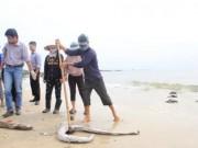 Tin tức trong ngày - Biển miền Trung sẽ tự đào thải độc tố?