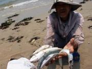 Tin tức trong ngày - Bộ Y tế lý giải vì sao không khẳng định cá ăn được chưa