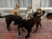 Thế giới - 100 con chó hoang cắn xé bà mẹ Ấn Độ