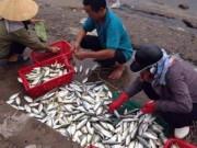 Tin tức trong ngày - Tin mới nhất về kết quả kiểm nghiệm cá ở miền Trung