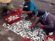 """Tin tức trong ngày - Cuối tháng 8, Bộ Y tế trả lời """"cá miền Trung ăn được chưa?"""""""