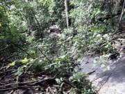 Tin tức trong ngày - Phát hiện xác chết bên tiền âm phủ trên núi Bà Đen