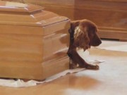 Ảnh xúc động: Chó buồn không rời xác chủ sau động đất