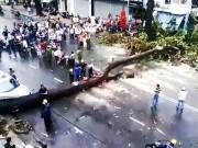 Tin tức trong ngày - TPHCM: Cổ thụ đổ ầm xuống đường, người dân tháo chạy