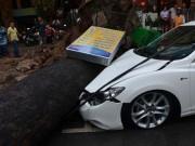 Tin tức trong ngày - Nam thanh niên bị cây đè ở TPHCM đã tử vong