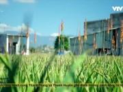 Du lịch - Những cánh đồng nha đam đẹp mê hồn ở Ninh Thuận