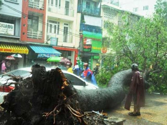 HN: Cành cây cổ thụ đè trúng 2 người sau trận cuồng phong - 4