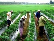 """Thị trường - Tiêu dùng - """"Nông nghiệp có thể làm nông dân giàu không?"""""""