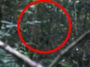 Phi thường - kỳ quặc - Phát hiện dấu hiệu của dã nhân Bigfoot bí ẩn