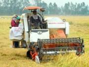 Thị trường - Tiêu dùng - Thu hút đầu tư vào nông nghiệp: Doanh nghiệp không đi xin