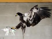 Thế giới - Hà Lan dùng đại bàng tóm thiết bị bay không người lái