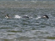 Bức ảnh thuyết phục nhất chụp quái vật hồ Loch Ness
