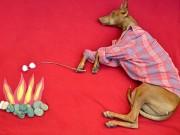 Tranh vui - Những chú chó khổ sở vì bị chủ làm khó
