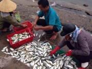 Tin tức trong ngày - Công bố kết luận về hải sản miền Trung sau sự cố Formosa