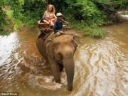 Campuchia: Voi giết chủ rồi lao theo  bạn gái  vào rừng