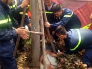 Tin tức trong ngày - Đi chữa cháy, cứu nam thanh niên mắc kẹt trong gốc cây