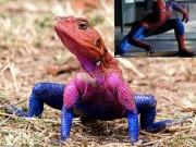 Phi thường - kỳ quặc - Phát hiện thằn lằn giống hệt người nhện