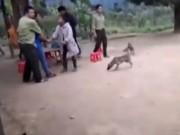 Video An ninh - Bùng phát nạn truy sát kiểm lâm, cướp gỗ ở Quảng Bình